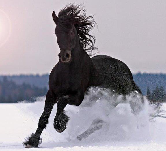 Você sabe por que a potência dos motores é medida em cavalos?