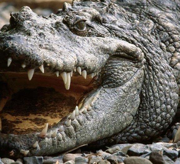 Medo e morte: 19 fotos que provam que a natureza na Austrália é assustadora