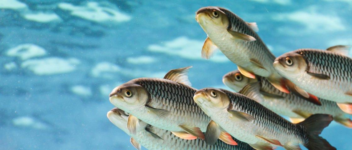 27 fatos polêmicos que vão te fazer pensar duas vezes antes de comer peixe