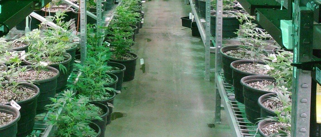 Na Holanda, telhados secos durante inverno denunciam plantações de maconha