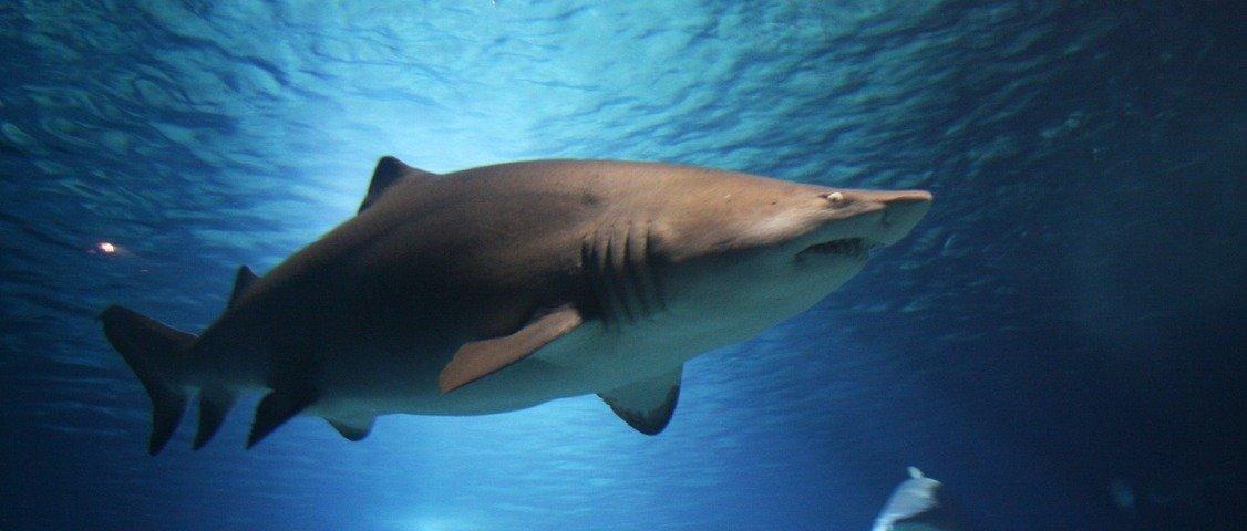 10 coisas mais mortíferas para as pessoas do que tubarões
