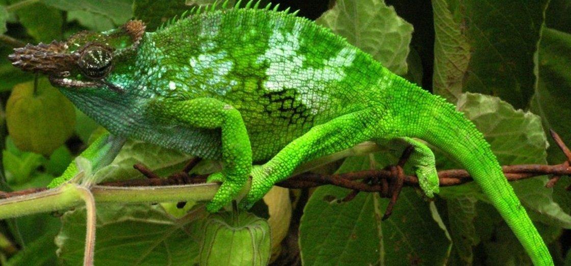 Cientistas criam material que troca de cor igual ao camaleão