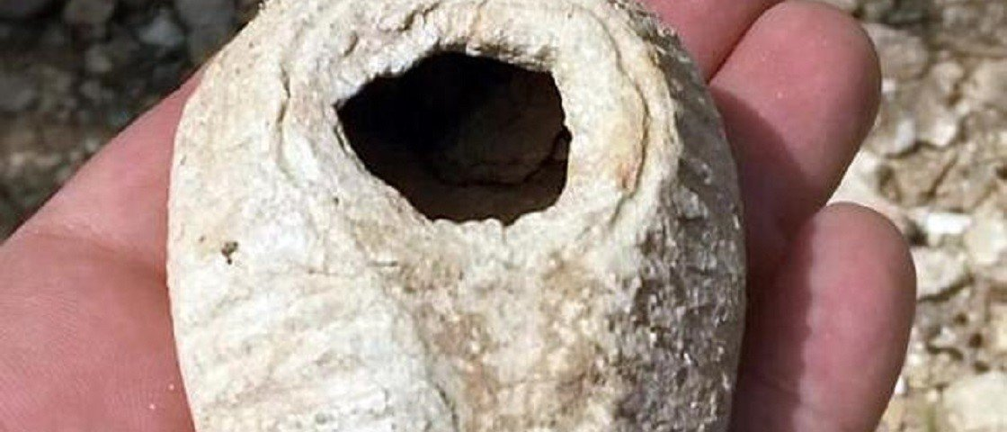 Ouriço ajuda a encontrar lâmpada de 1.400 anos em Israel