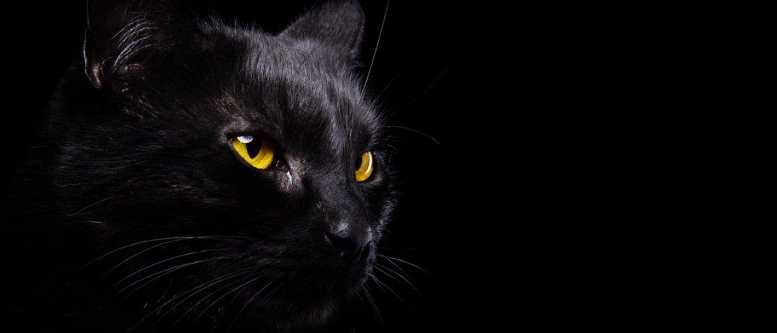 Vídeo de gato tentando proteger uma criança faz sucesso na internet – veja!