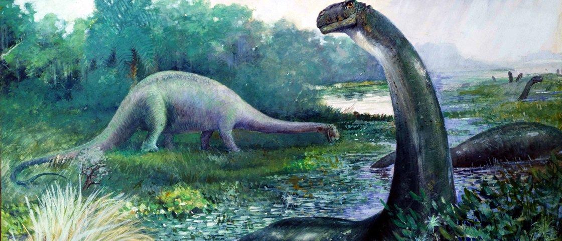 Estudo prova que Brontossauro é um gênero à parte