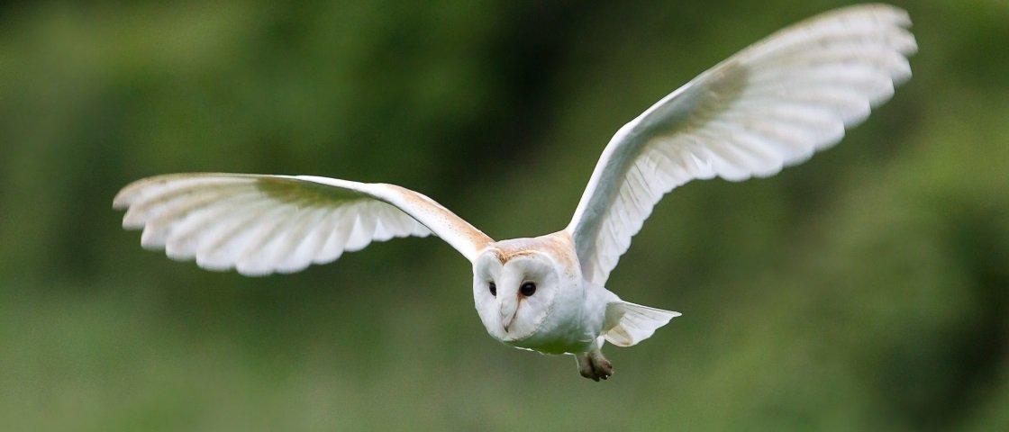Homem é acusado de chutar coruja em voo de parapente