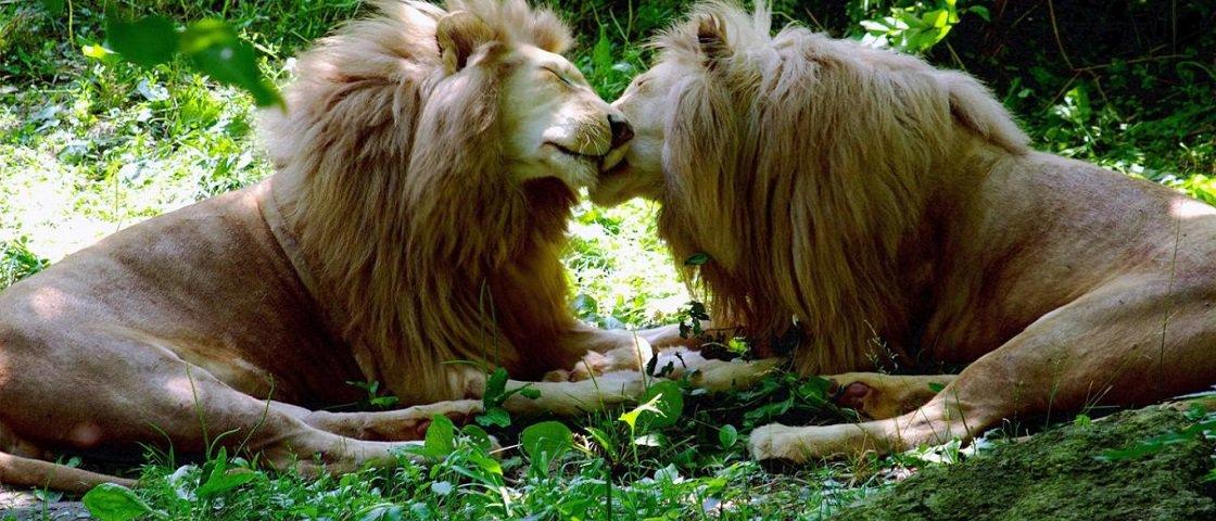 Sexo animal: os 6 bichos mais depravados da natureza