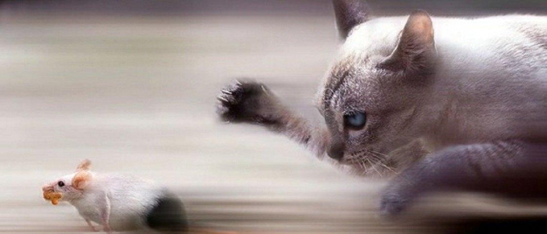 Por que os gatos trazem animais mortos para casa?