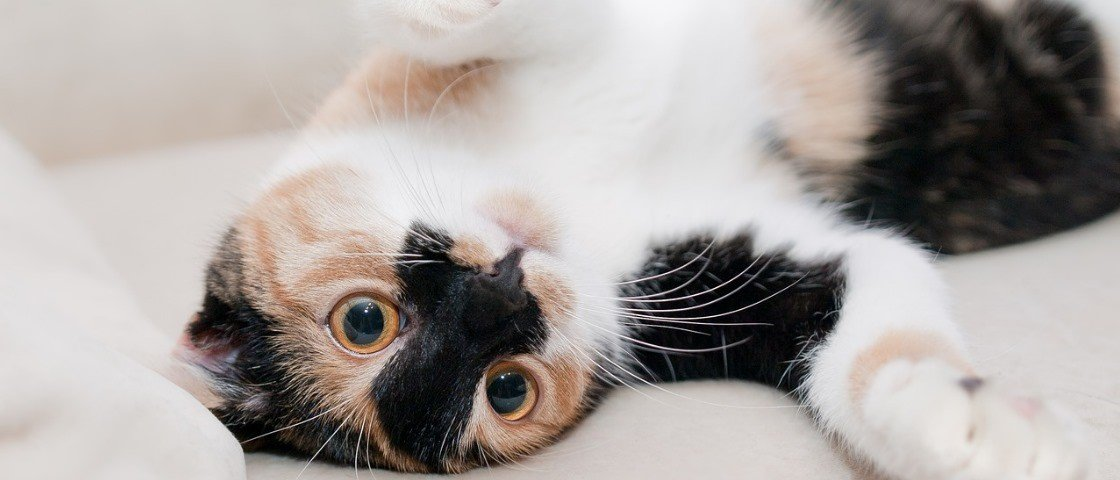 Especialistas alegam ter decodificado a linguagem secreta dos gatos