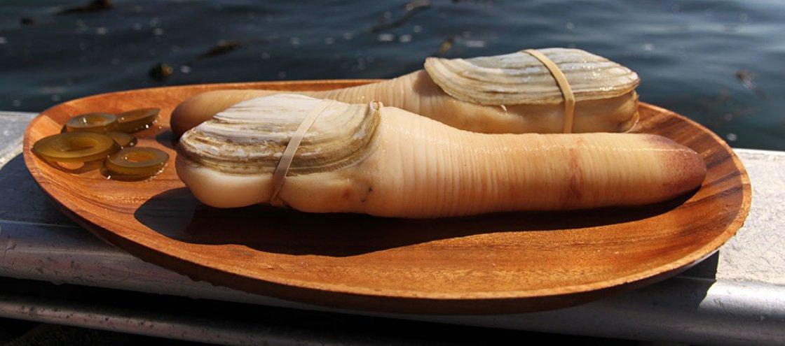 Geoduck: o molusco gigante em forma de pênis que você pode 'degustar'