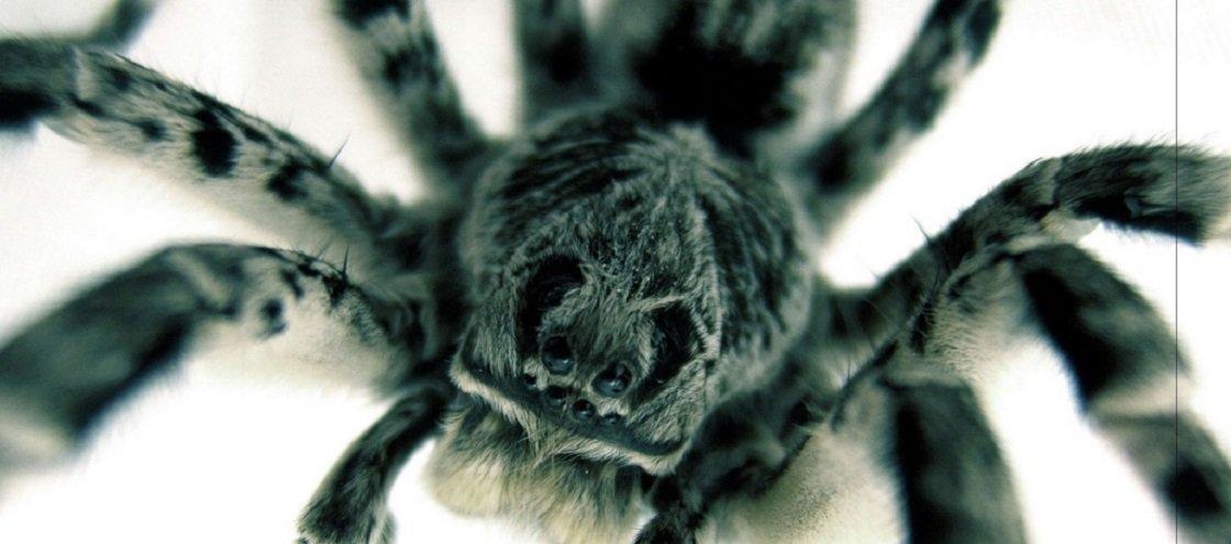14 GIFs de aranhas e insetos para você ter um dia sombrio
