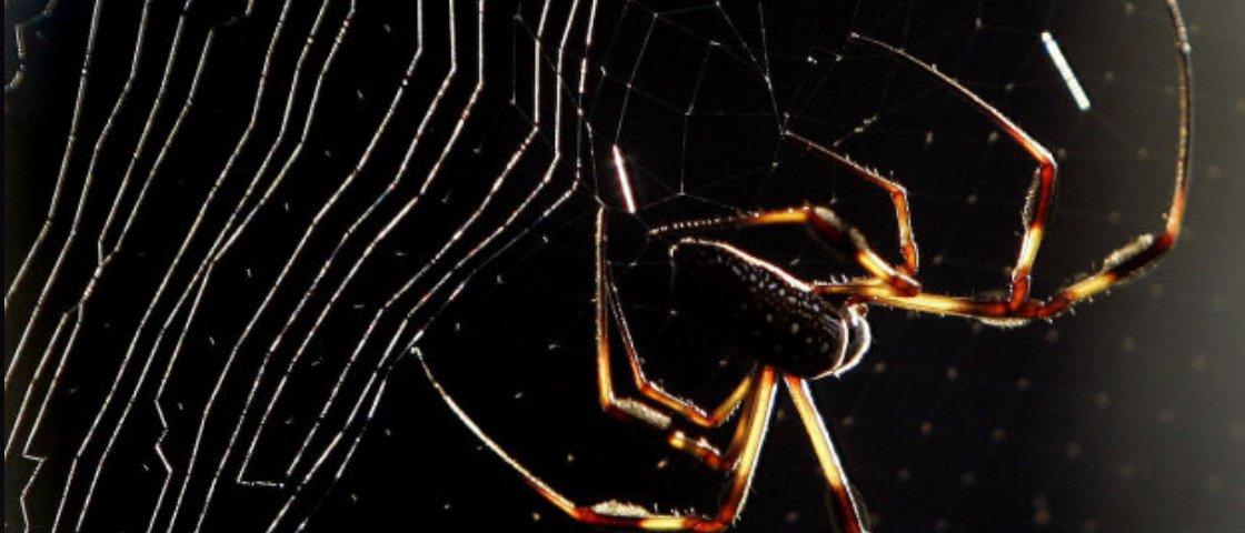 Aranhas expostas a grafeno produzem super teia