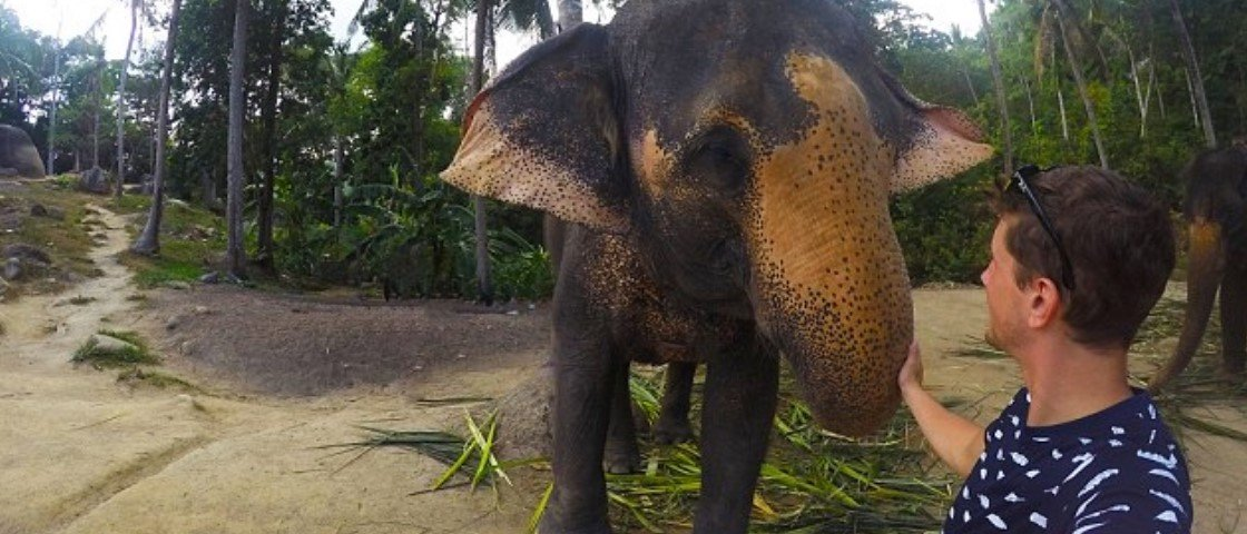 Elefante pega GoPro e faz selfie incrível na Tailândia