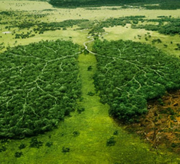 Dossiê: Catástrofes naturais que estão devastando o planeta [vídeo]