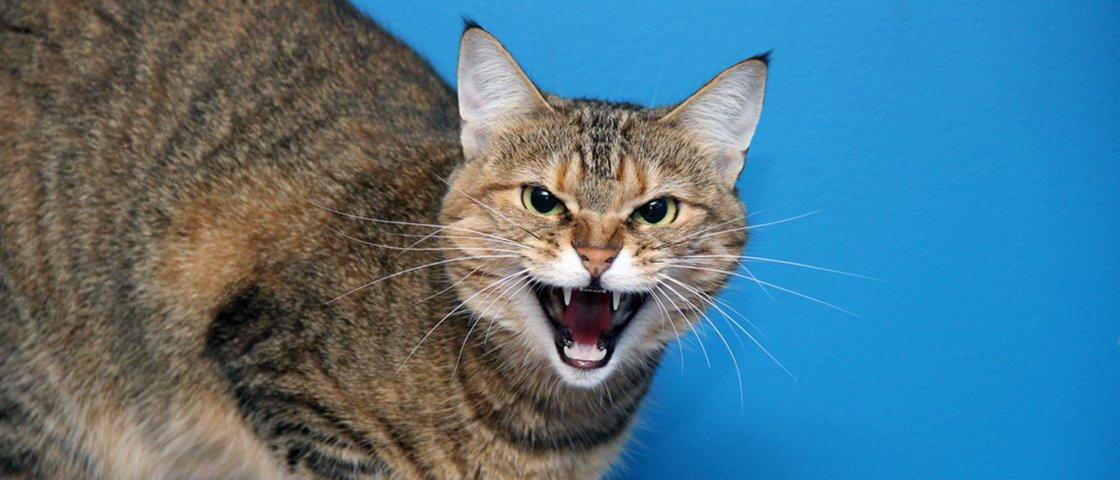 Qual é a misteriosa relação entre ter gatos e desenvolver esquizofrenia?