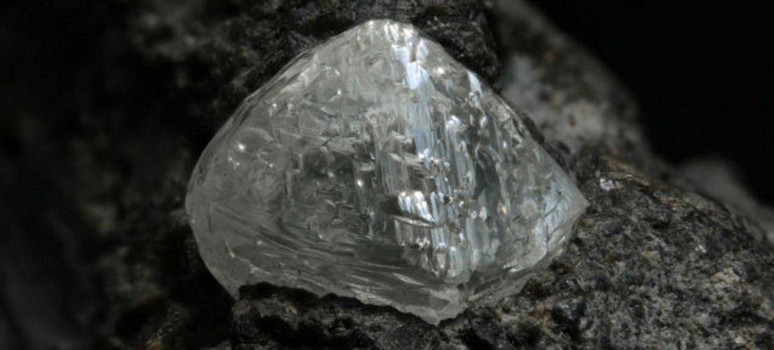 Arbusto africano indica locais em que pode haver diamantes