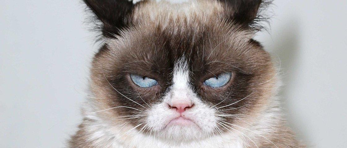 Assistir a vídeos estrelados por gatos pode fazer bem à saúde, diz pesquisa
