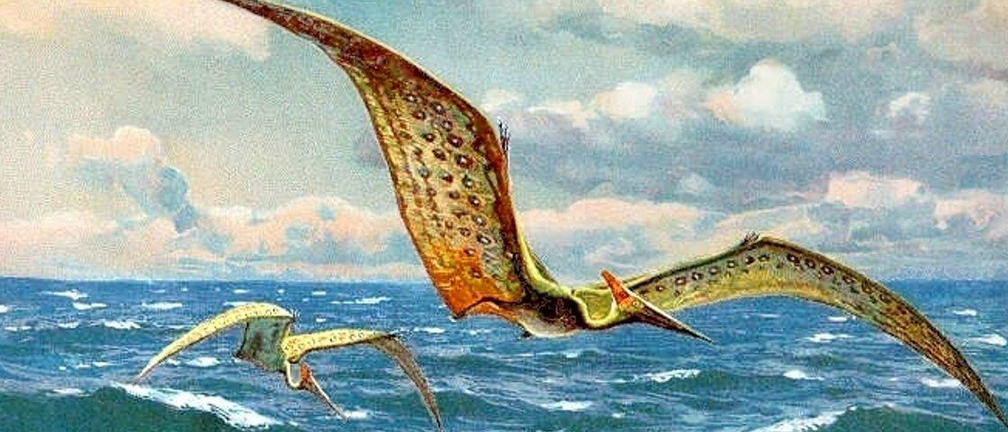 Brasileiro descobre novos pterossauros