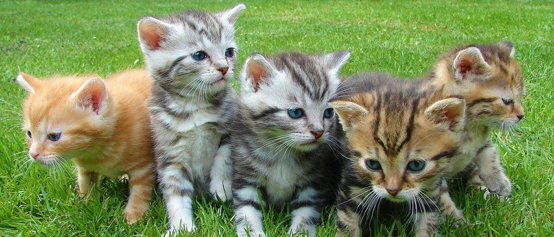 10 ilustrações divertidas mostram as vantagens de ter um gatinho em casa