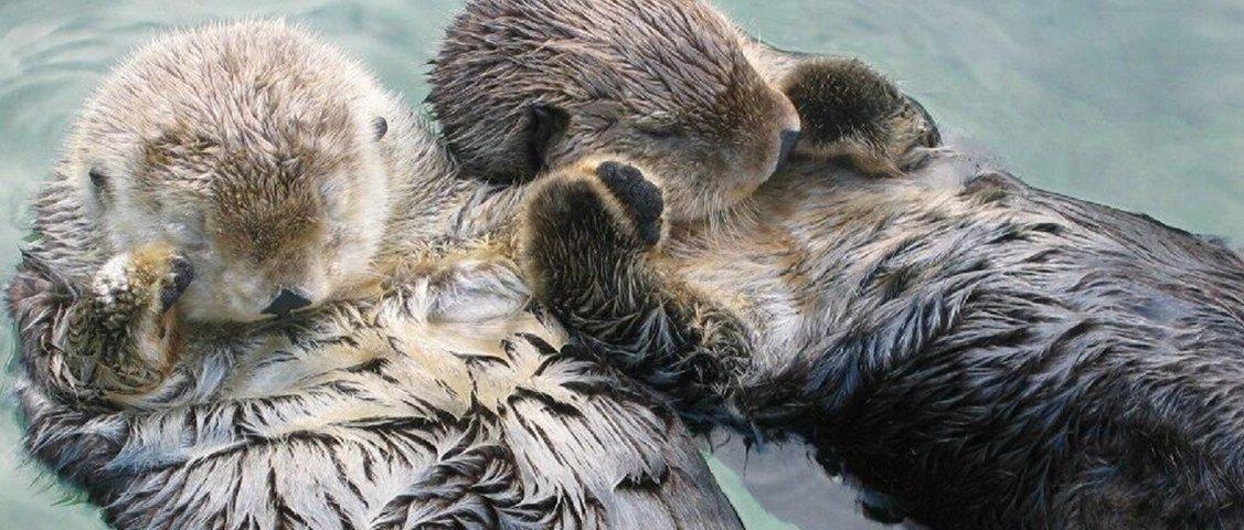 9 curiosidades sobre o jeito de dormir dos animais