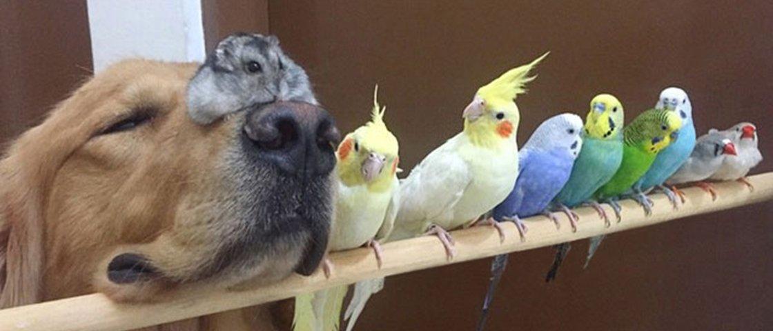 Linda amizade entre cão, hamster e pássaros faz sucesso na internet