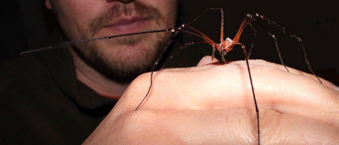 Aranhas podem ter prazer sexual e controle sobre fecundação, diz estudo