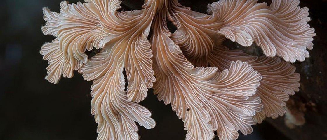Conheça 8 tipos de cogumelos incríveis