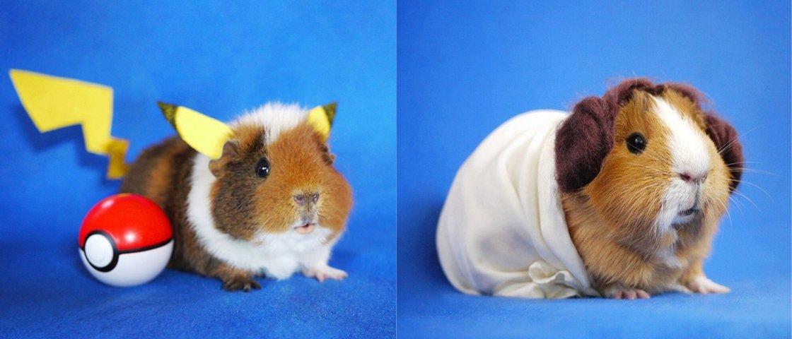22 fotos de porquinhos-da-índia que vão derreter o seu coração