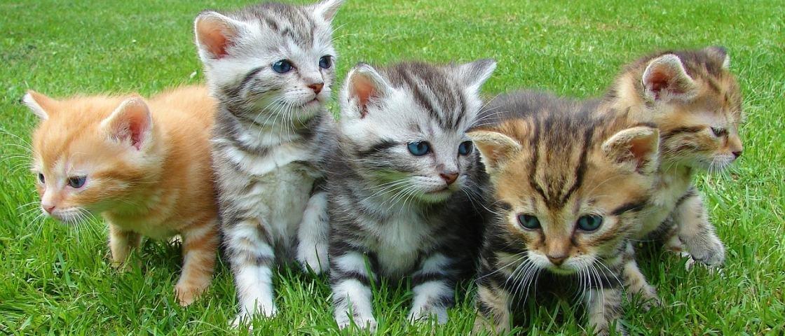 Veja a maneira correta de calcular a idade 'humana' de seu gato