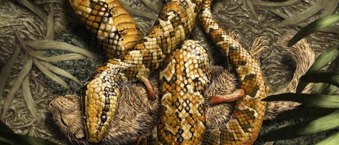 Fóssil descoberto no Brasil revela cobra de quatro patas