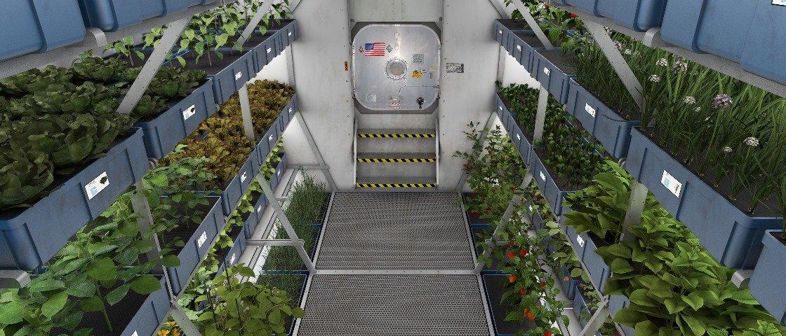 Astronautas da ISS comem pela primeira vez vegetais cultivados no espaço