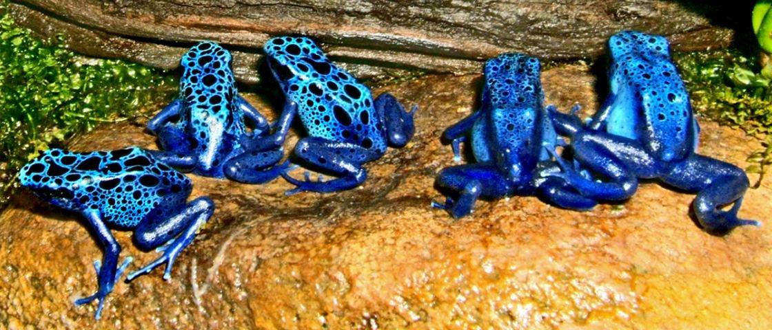 Se o azul é uma cor primária, por que existem tão poucos animais nesse tom?