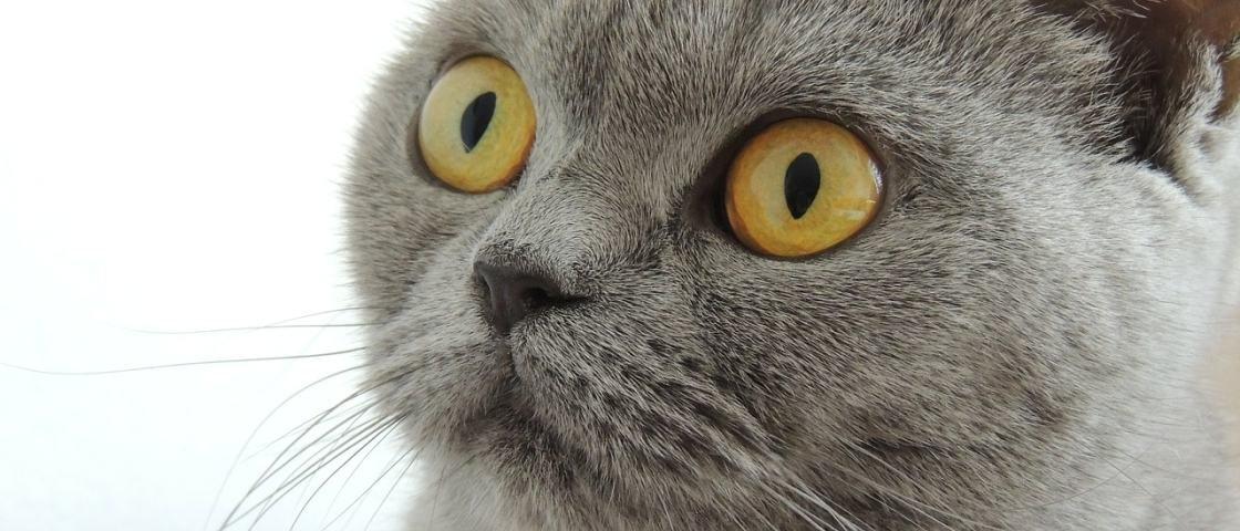 Pesquisadores afirmam: o seu gato não precisa de você