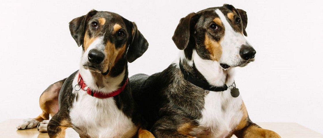 Debate: você clonaria o seu animal de estimação?