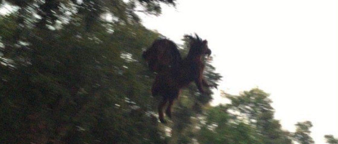 Será que é fake? Foto de animal demoníaco viraliza nos EUA
