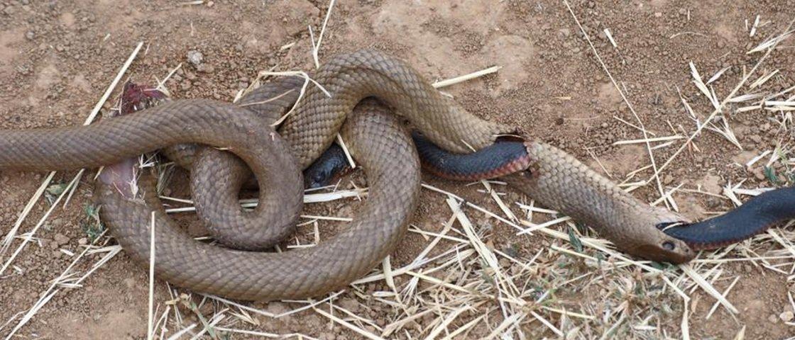 Você sabe o que aconteceu com essas cobras?