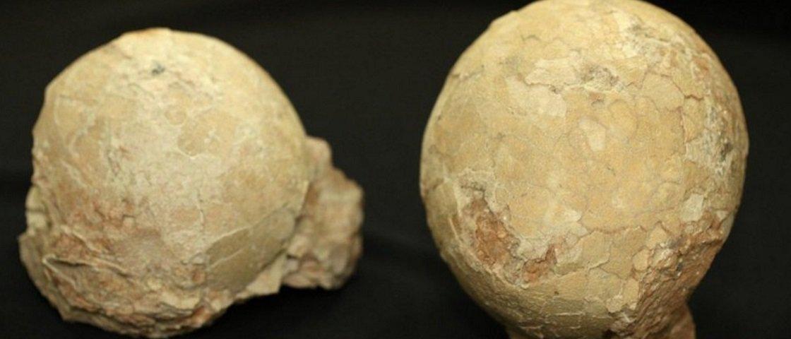 Ovos de dinossauro são encontrados intactos em Minas Gerais