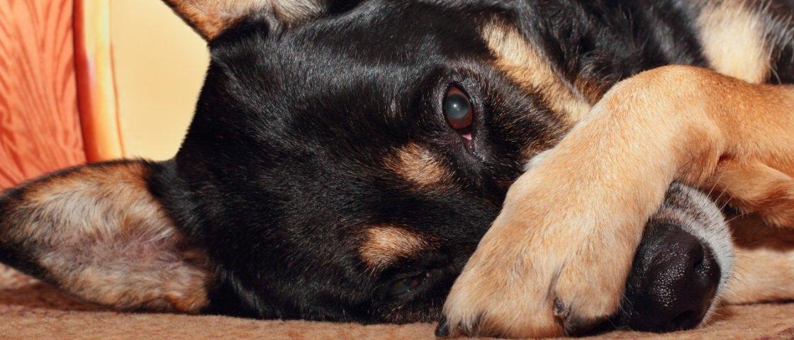 7 das flatulências mais problemáticas do reino animal