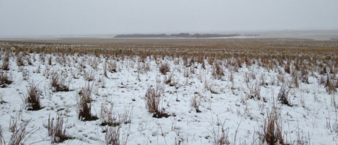 Você não vai acreditar, mas esta foto mostra um rebanho com 500 ovelhas