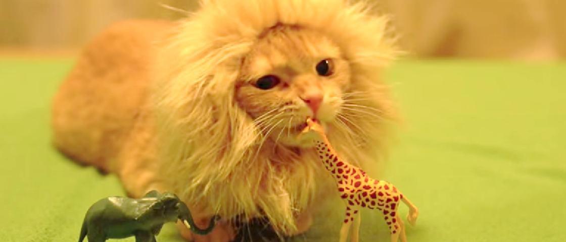 Pesquisa comprova que seu gato, de fato, é um pequeno leãozinho