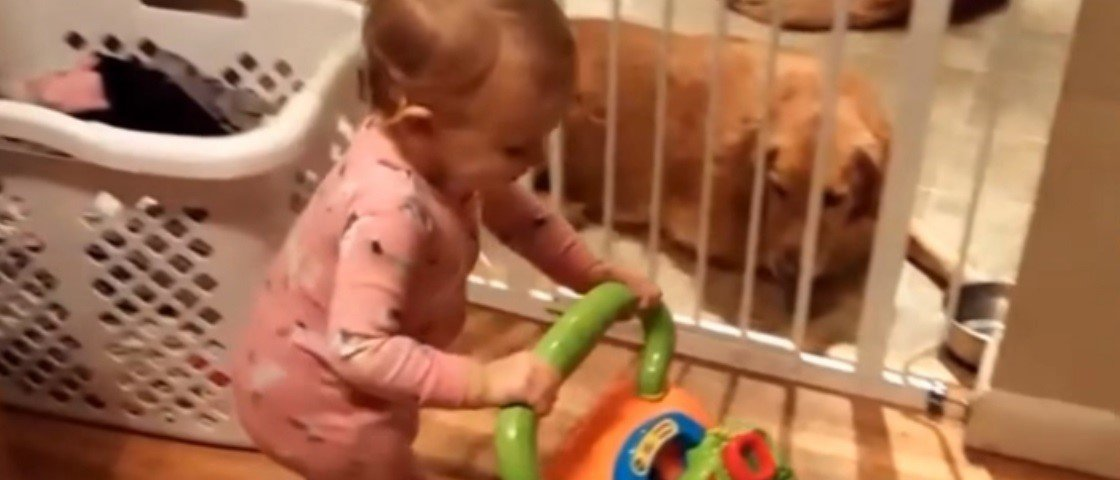 Até este bebê acha que Bohemian Rhapsody é uma música maravilhosa [vídeo]