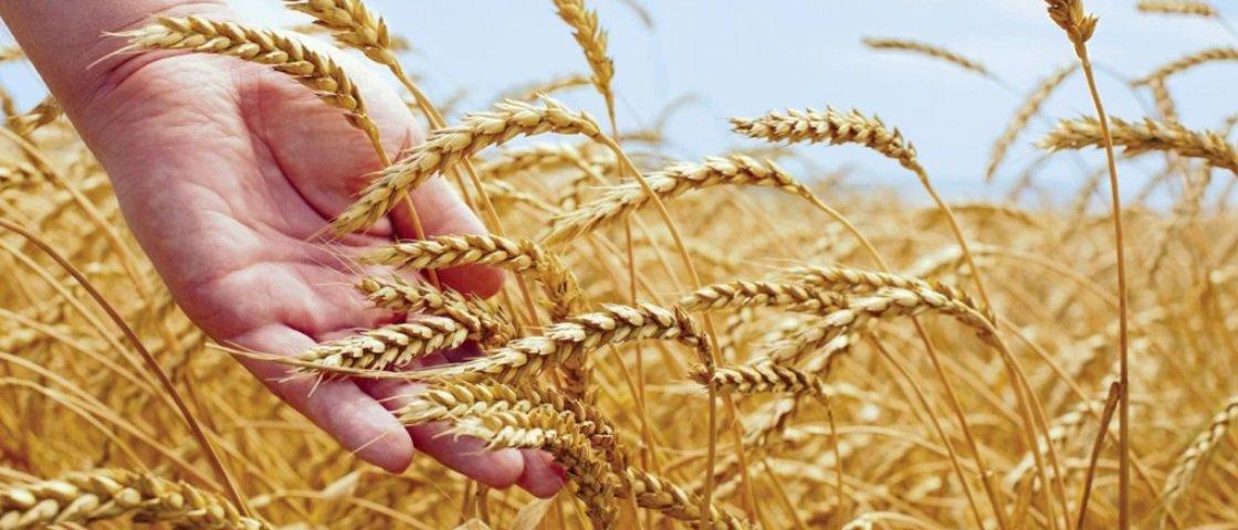 """A agricultura pode ser """"responsável"""" por diversas doenças modernas"""