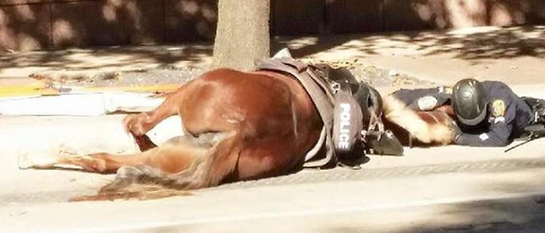 Foto de policial abraçado com égua atropelada é de partir o coração