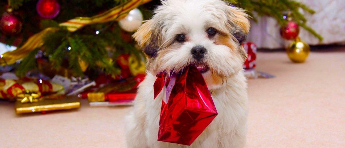 17 cães que são inimigos declarados das decorações de Natal