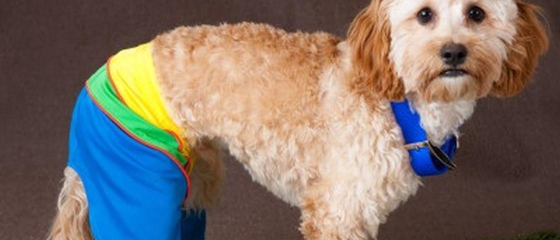 Discussão do dia na internet: como os cachorros usariam calças?