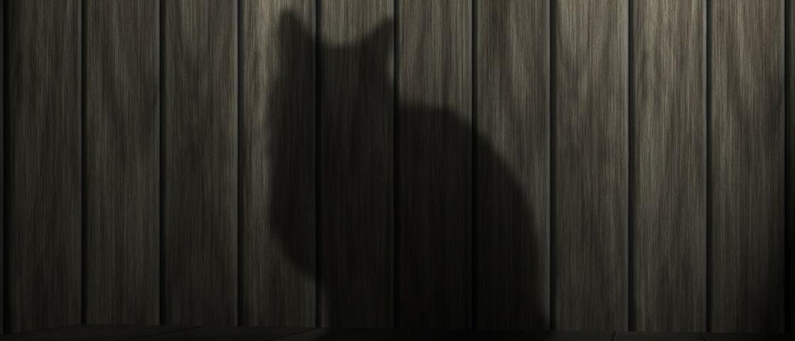 Por que os gatos gostam de se esconder em lugares escuros?