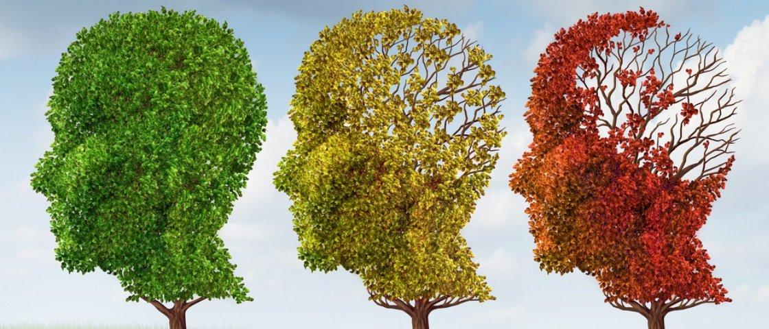 Pesquisadora descobre alimento capaz de melhorar a memória em 40%