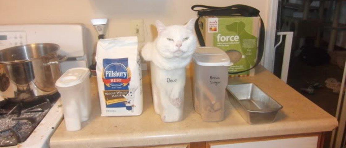13 imagens que provam que gatos cabem em qualquer lugar