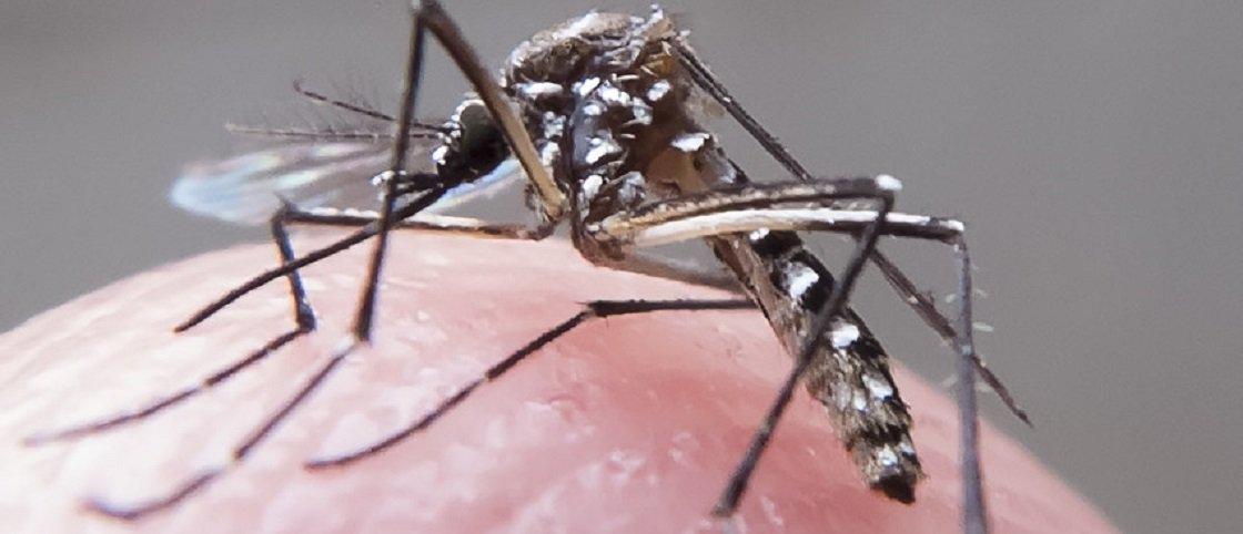 EUA confirmam transmissão do vírus Zika por relação sexual