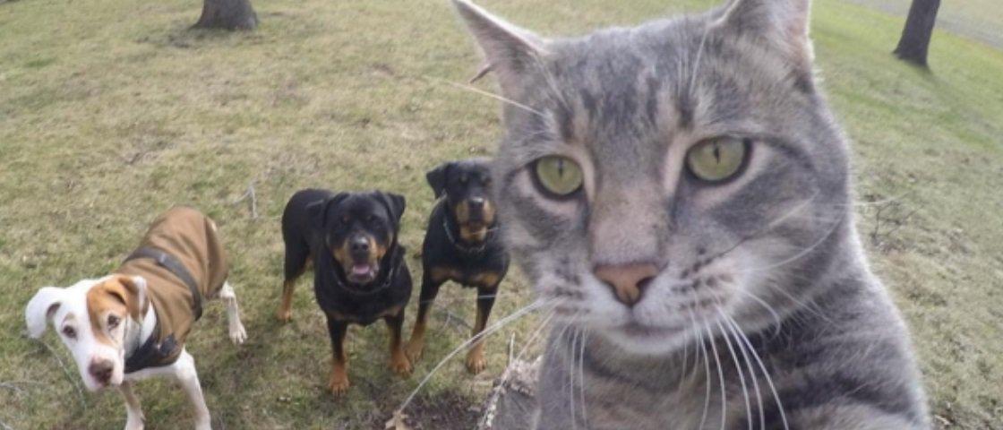 Os selfies deste gato são melhores do que os seus
